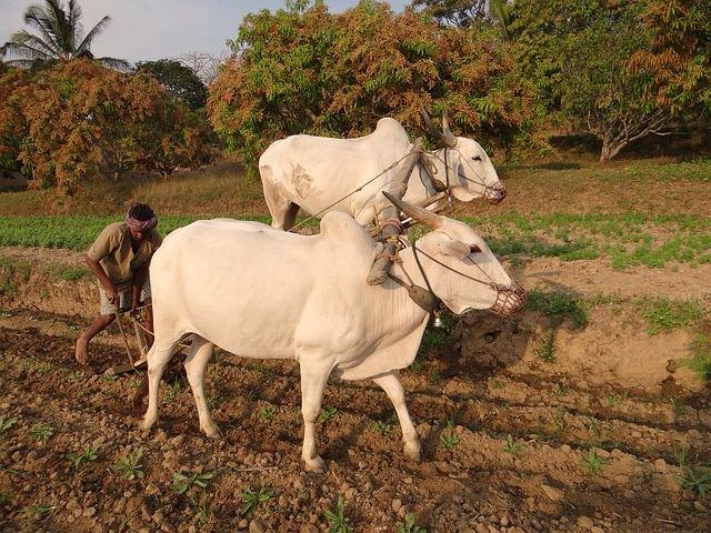ખેડૂતો માટે સારા સમાચાર : રાજકોટ ડિસ્ટ્રિક્ટ બેંક લાવી ખેડૂતો માટે સ્પેશલ 6 સ્કીમ